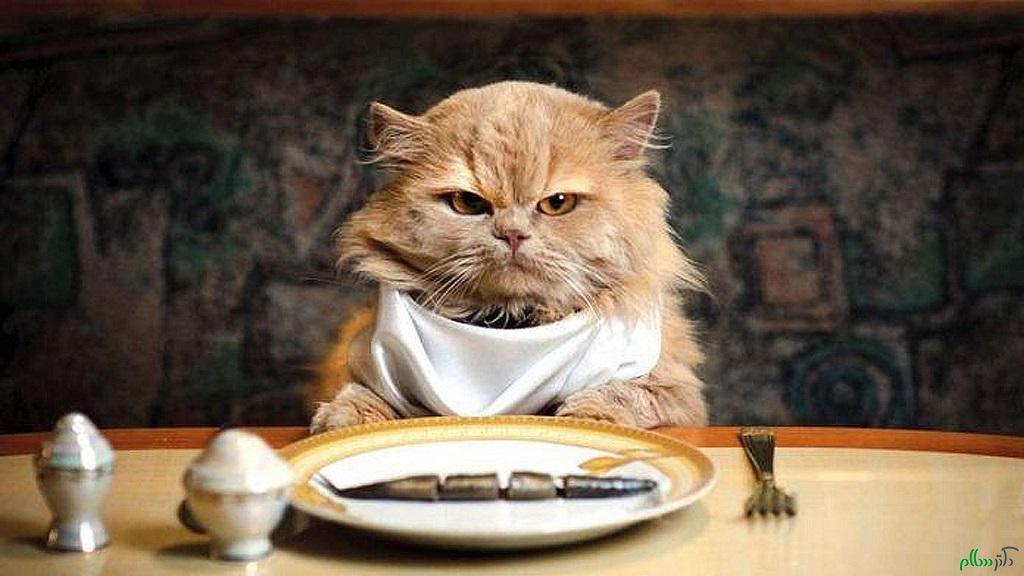 نکات مهم برای غذای گربه